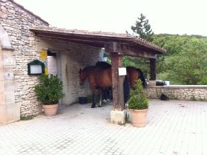 Die Pferde des Moniseur Maurice