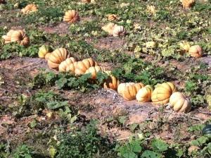 Dies sind die eindeutigen Zeichen, dass der Herbst da ist.