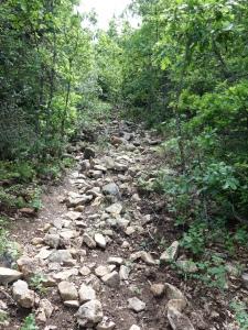 Steinige Wege im Luberon
